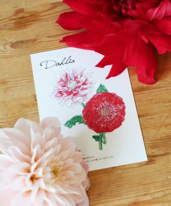 お花の定期便 / オリジナルポストカード付き premium_03