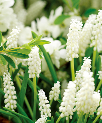 mumokuteki / 球根Garden Set ホワイト03 / ギフトパック_7